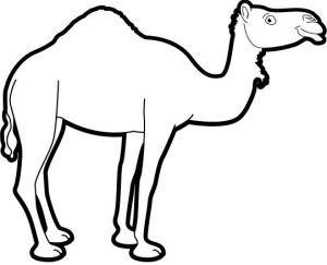 EXIFTool Camel